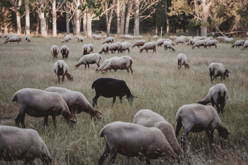fotografo de animales miguel moba fotografo